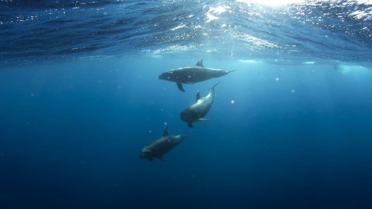 海の中のイルカ